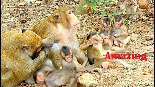 Wow Very Funny Clip | Please Relax Stress With A Lot Of Baby Monkey | They are Play Very Happy
