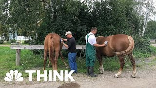 These Prisoners Have Their Own Keys, Therapy Horses, And Leave Prison Every Day | THINK | NBC News