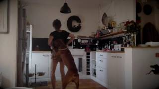 Download Lagu Can't stop the feeling (with my dog ;) @jtimberlake @justintimberlakeVEVO Gratis STAFABAND