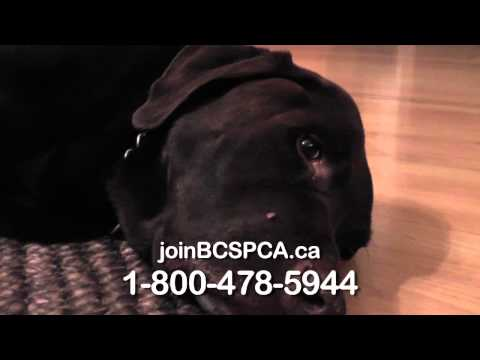 Animal Cruelty Commercial (JP Georganas)
