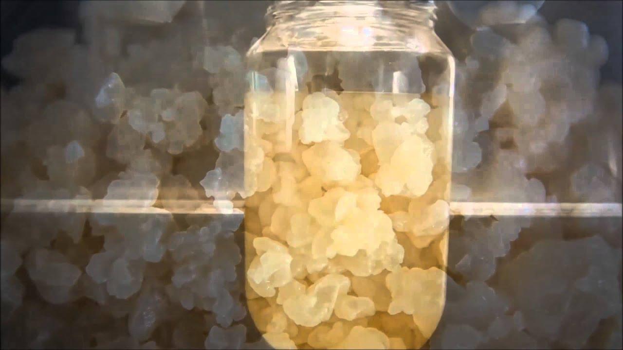 Как сделать квас из рисового гриба
