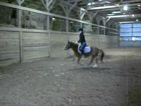 stewy--welsh jumping pony for sale in ohio Video