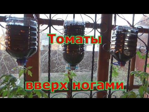 Выращивание помидоров вниз головой-вверх корнями