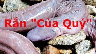 Video clip Tốp 10 loài trăn, rắn độc nhất vô nhị trên quả đất