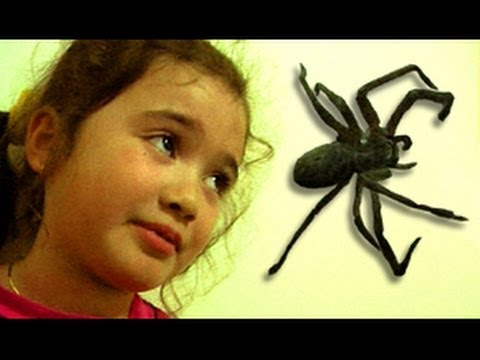 Big Spider Attacks Daughter