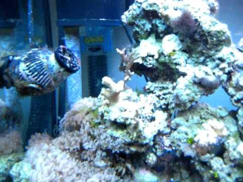 aquarium r 233 cifal eau de mer juwel lido 120 l 12 mois