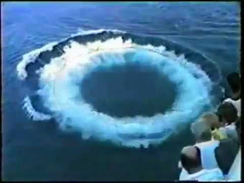 The most extraordinary Toroidal Vortices created by dolphins and whales!