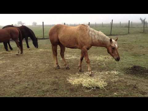 Horse Movie buck - Stupid Woman Kills Horse For Doing What She Taught It - Rick Gore Horsemanship video