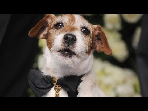 Uggie Unleashed! Get to Know THE ARTIST's Breakout Star