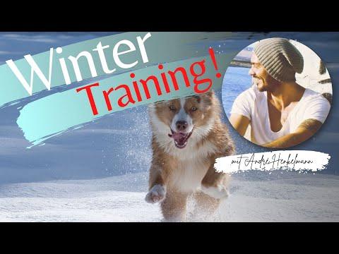 Hundeerziehung im Herbst/Winter (Profi-Tipps Online-Hundeschule)