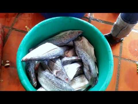 Asian Travel & Food - Tour To Kampot - Tasting Kampot Food - Youtube