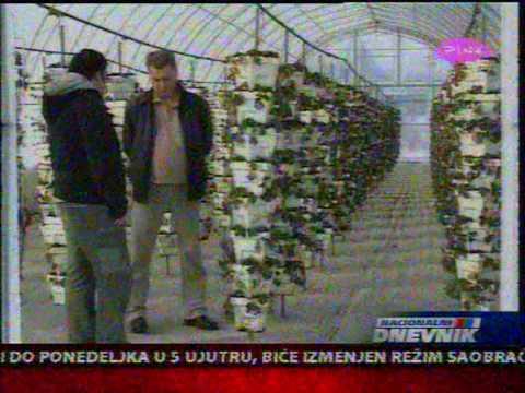 Plantaza Rasadnik Jagoda Miletic (Nikola Intervju vesti pink)