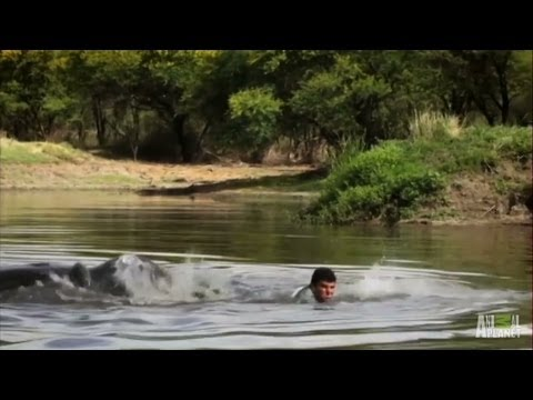 Boy Charged by Hungry Hungry Hippo | Fatal Attractions