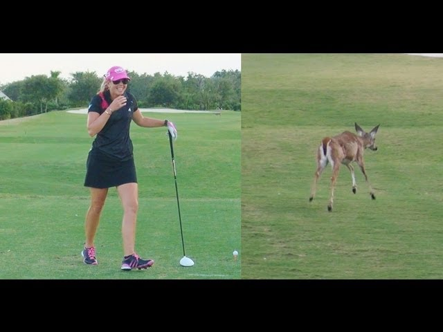 FUNNY VIDEO A BIG SURPRISE BY ANIMAL - PAULA CREAMER THE PINK PANTHER - CRAZY WILD ANIMALS