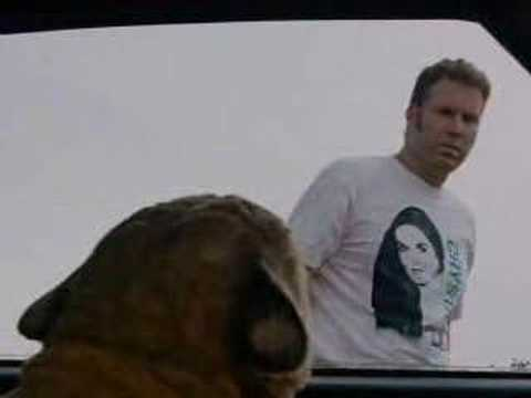 Will Ferrell As A Cat Gif