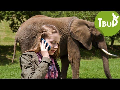 Dickhäuter (Folge 6) | Tiere Bis Unters Dach | SWR Kindernetz