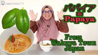 Papaya From Wakuya Town, Japan (Making Indonesian Young Papaya Curry Recipe)