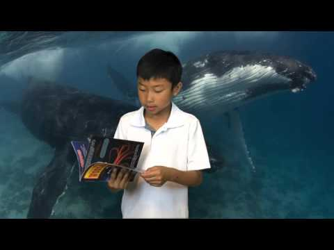 Sperm Whale Vs Giant Squid By Kenneth