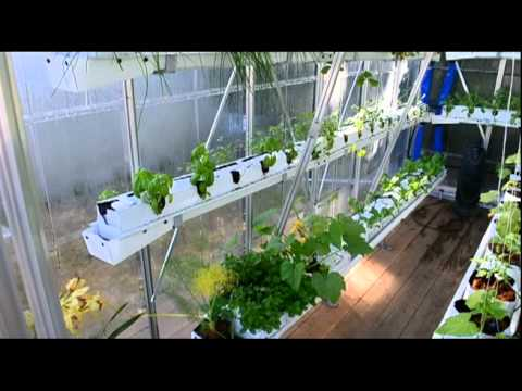 Sustainable Urban Agriculture Hydroponic Vegetable