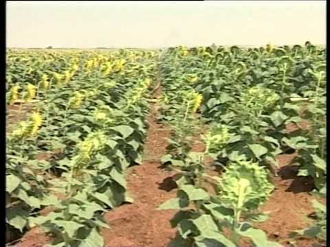 Agriculture in Syria الزراعة في سورية  Arabic Version