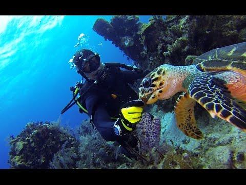 Bahamas Sea Turtle Encounter
