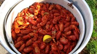 Boiled Crawfish 3-18-2012