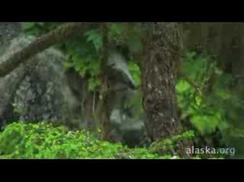 Alaska.org - Wrangell Alaska: Waiting To Be Discovered ...