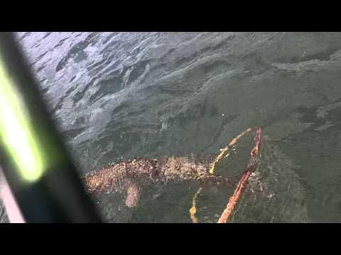 LARGE 11 Mile Pike FishCat 4 float tube Sage 5 wt flyrod