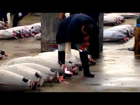 The Famous Tokyo Tuna Auction at Tsukiji Market