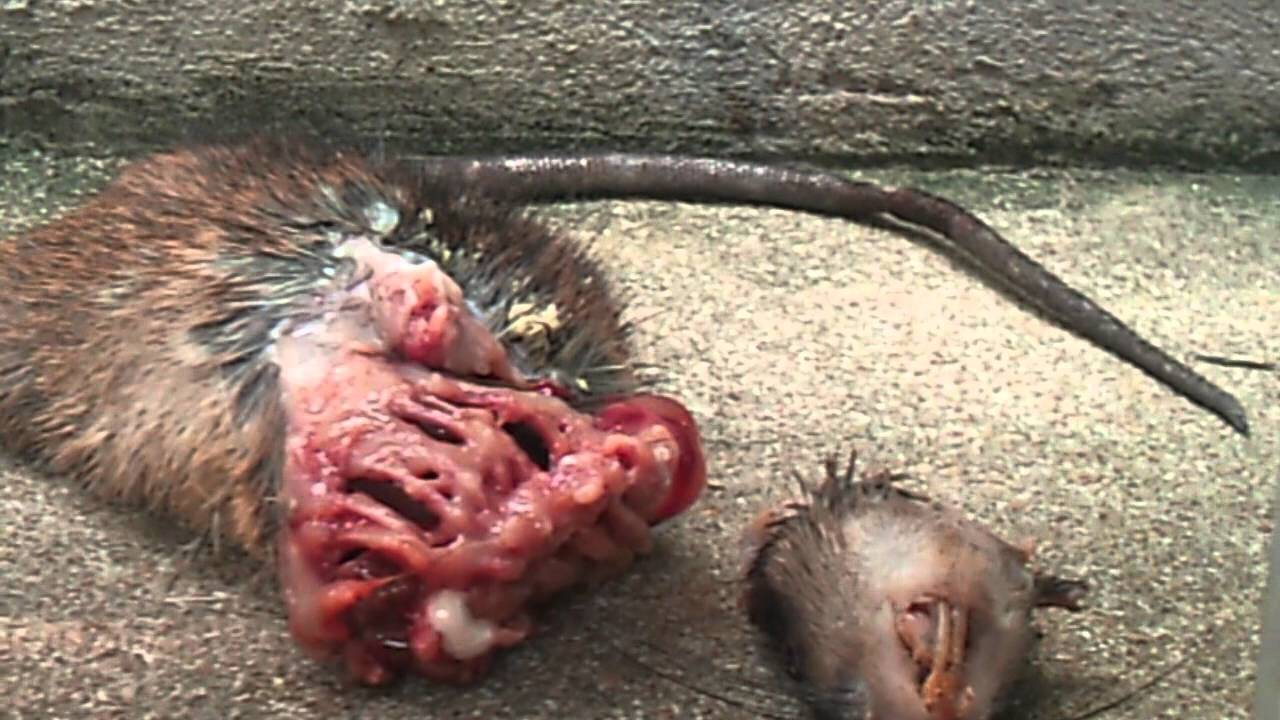 Can Baby Squirrels Eat Cat Food