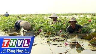 THVL l Ký sự truyền hình: Đồng rau mùa nước
