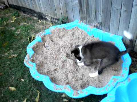 What To Use To Make Dogs Stop Digging Holes