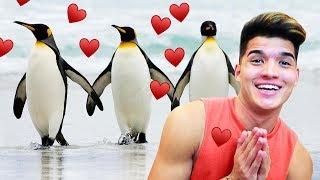 Adopting My Very Own Penguins!