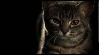Unbelievable Slow Motion Pouncing Cat