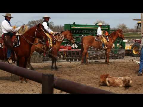 Vaquero, Californio, Buckaroo, Ranch Roping, Hackamore Horse Calf Branding