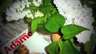 Vídeo 80 de Salvatore Adamo
