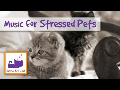 MUSIC FOR PETS relaxing soothing piano music for stressed anxious cats dogs rabbits guinea pigs
