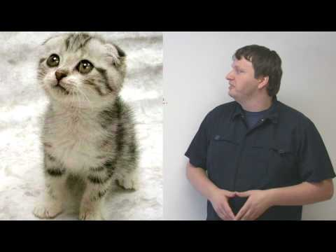Cat Idioms in English