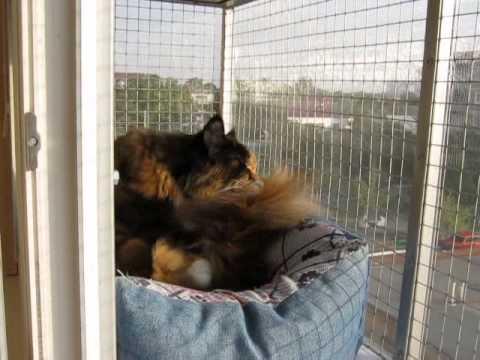 Оконный вольер (часть 2) # Выгул для кошек на окне