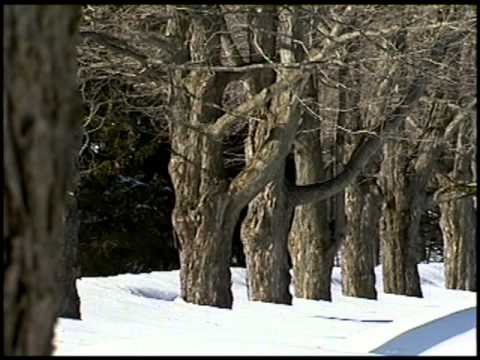 First Signs of Spring - Maple Syrup Production at Heiberg Forest