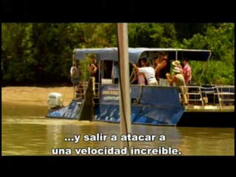 Aguas Asesinas, trailer subtitulado