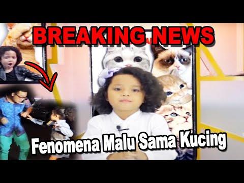 download lagu BREAKING NEWS: Fenomena Malu Sama Kucing gratis