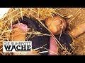 Ponyhof Des Grauens Eifersucht Macht Alles Möglich Can Yildiz Die Ruhrpottwache SAT 1 TV mp3