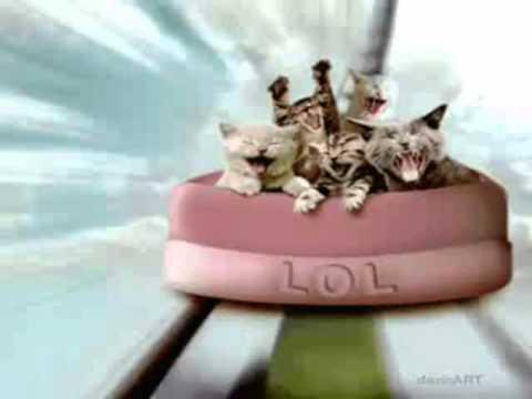 Happy Birthday Funny Cats Style Free Happy Birthday