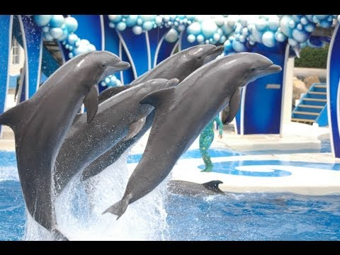 "♥♥ SeaWorld s ""Blue Horizons"" Dolphin Show (in HD)"