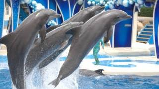 "The Complete 2017 SeaWorld ""Blue Horizons"" Dolphin Show"