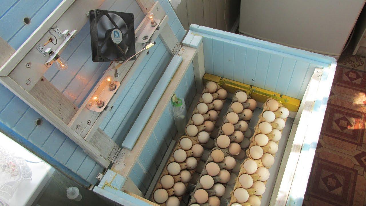 Инкубатор для куриных яиц своими руками