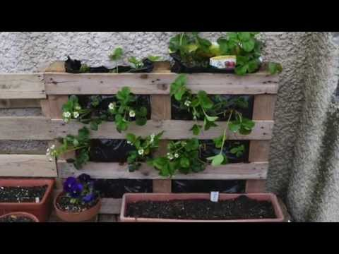 Huerto vertical en palets tarimas ecodaisy youtube for Jardin vertical casero