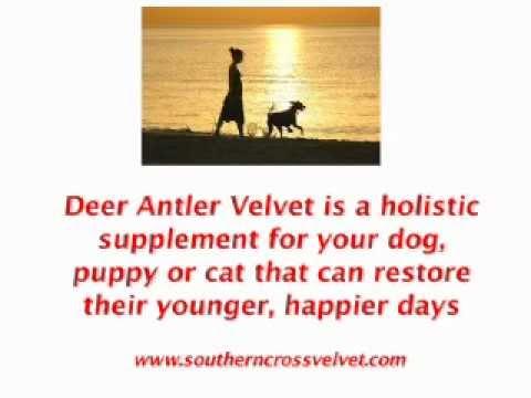 Revealing Sensible Solutions Of Deer With Velvet Antlers