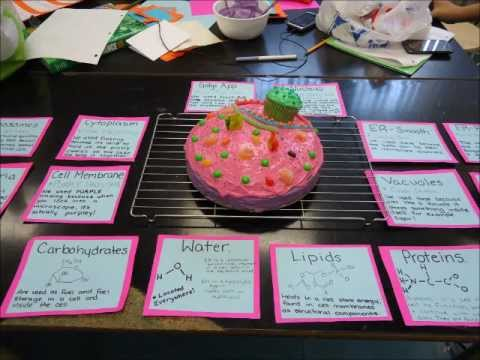 Animal Cell Cake Labels Animal Cell Cake